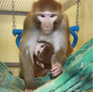 Monkeys in Our Midst, Providing Insight into Human and Animal Health @ EcoTrust Building | Portland | Oregon | United States